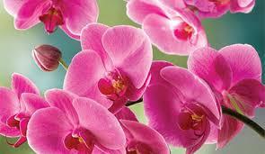 Flowers - <b>Floral</b> Arrangements, Flower Delivery