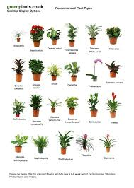 common desktop office plants best office plant no sunlight