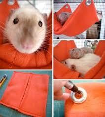 Rats: лучшие изображения (75) в 2019 г. | Крысы, Хорьки и Гамаки