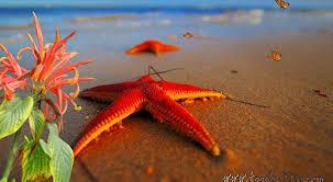 """Résultat de recherche d'images pour """"soleil plage vacances"""""""