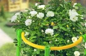 Товары для выращивания растений грунты для комнатных ...
