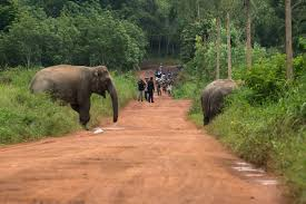 photo essay frustrated humans face off hungry elephants police