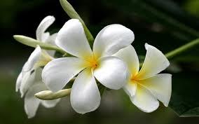 une fleur - blucat 25 septembre trouvée par Suri Images?q=tbn:ANd9GcQ9uAyuG4ZfiPAGKT2hEVpmWpSSSk99kuj8cwzoua2Wm5YVmiJX