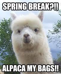 Image result for spring memes