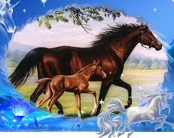 """Résultat de recherche d'images pour """"photo de chevaux"""""""