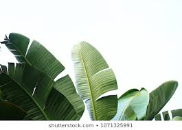 <b>Sea Leaf</b> Images, Stock Photos & Vectors | Shutterstock