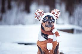 The 50 Best <b>Dog Hats</b> of 2020 - Pet Life Today