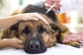 Bildergebnis für hund in narkose
