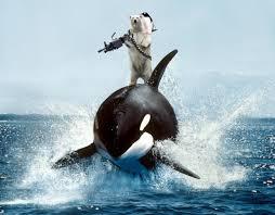 killer whale vs polar bear polar bear attacks killer whale new killer whale vs polar bear polar bear attacks killer whale new 2016