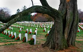 u s department of defense photo essay a tree frames arlington national cemetery s section 33 when wreaths decorate graves to honor and remember
