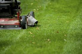 lawn care pest control in florida your green team lawn mowing