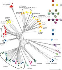 Implications of hybridisation and cytotypic differentiation in ...