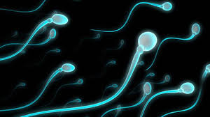 sperma haiwan berusia 17 juta tahun