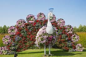 Image result for images of flower garden in dubai