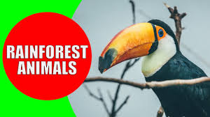 <b>Rainforest Animals</b> for Children – <b>Jungle Animal</b> Sounds and ...