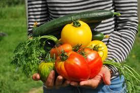 Image result for vegetable garden