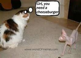 Funny Animal Pictures | Cat Memes, Funny Cat Memes and Fat Cats via Relatably.com