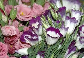 Эустома, лизиантус, <b>японская роза</b>