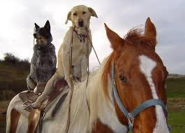 Πως τα ζώα καταλαβαίνουν τη κακοκαιρία;