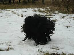 Ein Hund spielt Wirbelsturm - Bild \u0026amp; Foto von judith koester aus ... - Ein-Hund-spielt-Wirbelsturm-a19570911