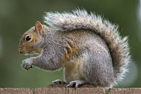 Image result for squirrels