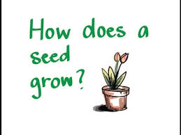 Image result for pictures of growing seed