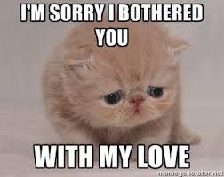 I'm sorry i bothered you with my love - Super Sad Cat   Meme Generator via Relatably.com