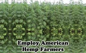 Image result for kentucky hemp