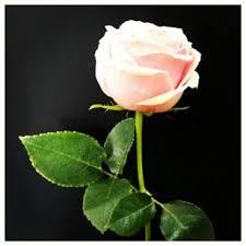 إعدام الشاعر العراقي أحمد النعيمي صاحب قصيدة «نحن شعب لا يستحي» Images?q=tbn:ANd9GcQCJGQxhX_5MigDNOj5iDfkl3kzBzEQ6dHSb0ZQ7gUQcnrq_kBylA