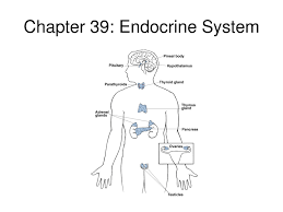tag  diagram of endocrine system   human anatomy diagramdiagram of endrocrine system endocrine system diagram labeled   danasrig top