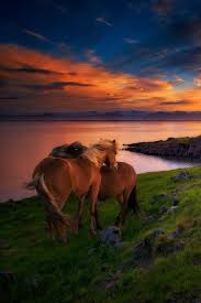 best images about ic horses iacute slenskir hestar on i love music jazz classical bluegrass most of all the beach and the mountains i am an outdoors man this is a nsfw site although i do not
