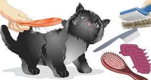 <b>Расчески для кошки</b> - разложим всё по полочкам!