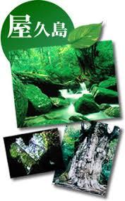 「1993年 - 屋久島世界遺産」の画像検索結果