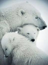 Animals: лучшие изображения (46) в 2020 г. | Животные ...