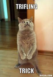 Horrorcat Meme Generator - DIY LOL via Relatably.com