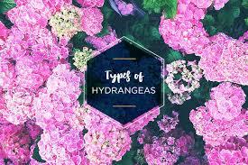 Types of Hydrangeas: A Visual Guide - FTD.com