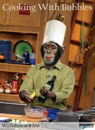 Afbeeldingsresultaat voor kokende chimpansees