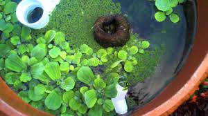 diy patio pond:  maxresdefault