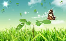 http://cpperalta.educacion.navarra.es/ciclo1/cono-2/arboles-y-plantas/