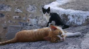 ELLLO Views #825 <b>Stray Cats</b> Part 1