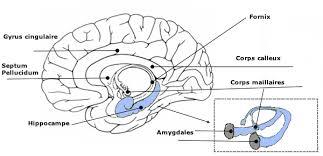 Psychologist Royal Oak