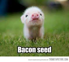 Image result for bacon seed