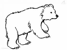 bear coloring pages essay printable care animals coloring adult gallery of printable bear pictures