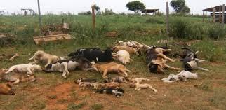 Resultado de imagem para cães mortos num canil