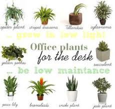 find a way by jwp low light and low maintance plants for your office desk best low light office plants