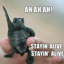 Ah ah ah! Stayin' Alive, Stayin' Alive - Disco Turtle - quickmeme via Relatably.com