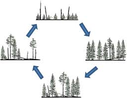 Conceptual models of <b>forest</b> dynamics in environmental education ...