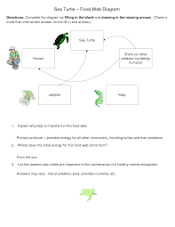 best images of blank turtle diagram examples   process turtle    leatherback sea turtle food web