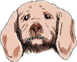Image result for Detecting Warts On Your Pet