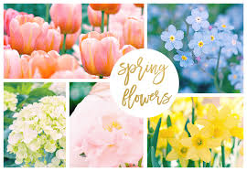 42 <b>Spring Flowers</b> Inspired by Pantone Colors of the Year